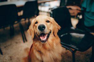 Pies - przyjaciel